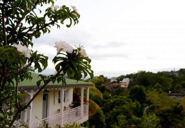 Chambres d'hôtes à Le Gosier - La Chambre des Amis - GOSIER Port-Blanc